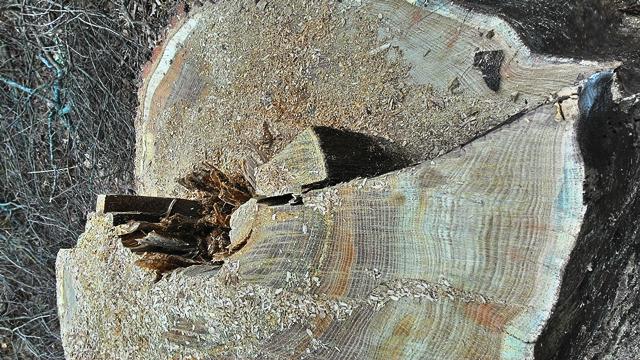 дрова березовые талдом